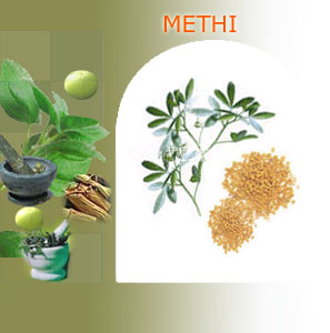 methi suppliers india,Indian herbs suppliers,herbs exporters,methi herbs manufacturers,methi exporters india