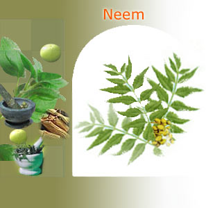 neem suppliers india,Indian herbs suppliers,herbs exporters,neem herbs manufacturers,neem exporters india